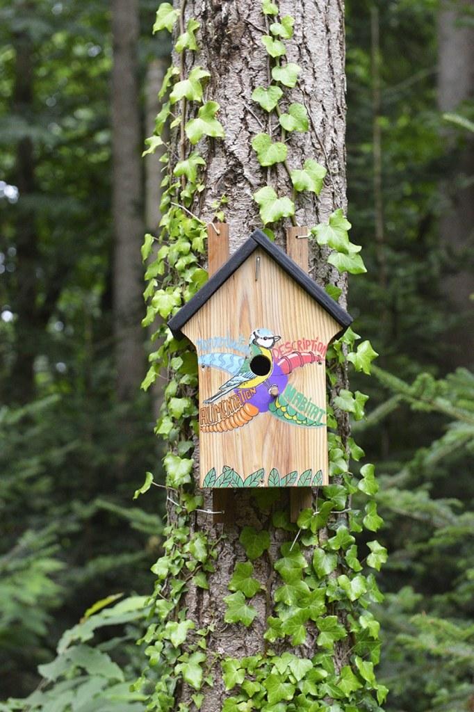 nichoir à oiseau avec carte mentale dessinée par Sophie Le Penher championne du monde de Mind Mapping