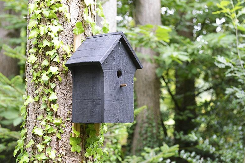cabane à oiseaux en bois brûlé installée en forêt