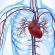REDUCE Trial: Pacientes con FOP y ACV criptogénico tienen menor riesgo de ACV recurrente cuando son tratados con terapia antiplaquetaria y dispositivos de cierre