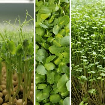 Mixed micro greens