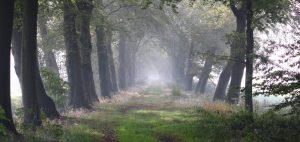 1 home bomenrij in mist