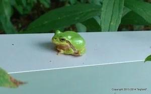 架台の上で休むカエル