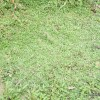 プチソーラーのクラピア植栽事例