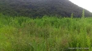 岡山・赤磐市の太陽光発電用地