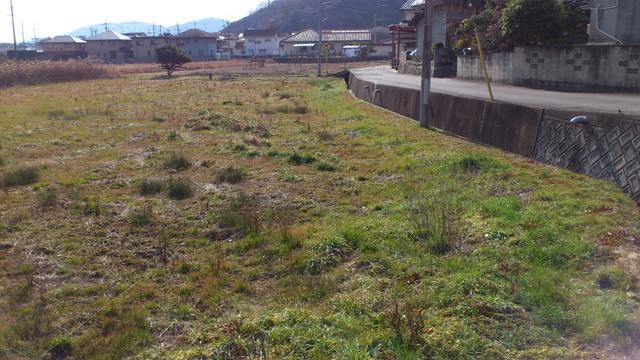 岡山県笠岡市の太陽光用地