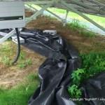 台風11号の爪痕と勝手に生えたシロツメクサ