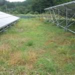 シロツメクサのグランドカバー+部分的に除草剤散布で雑草対策
