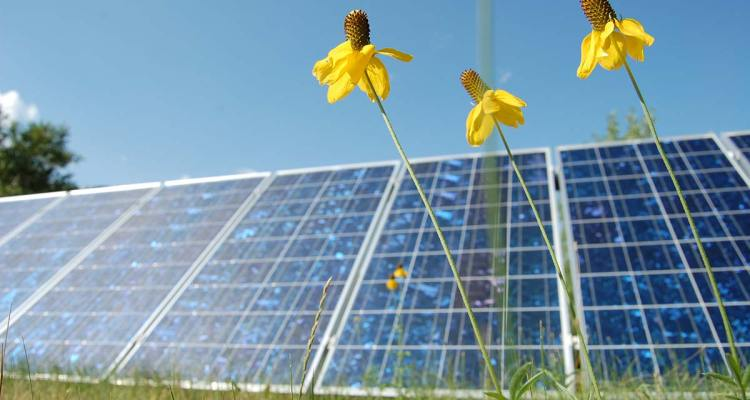 Home solar panels with flowers in foreground.