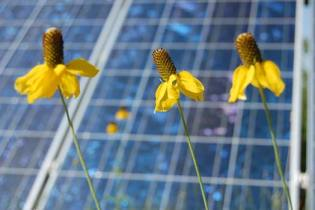 solar-resources-flowers-pic1
