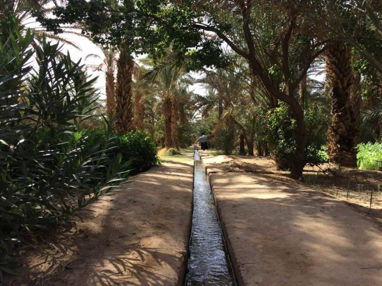 The oasis at the back of Hassi Labied