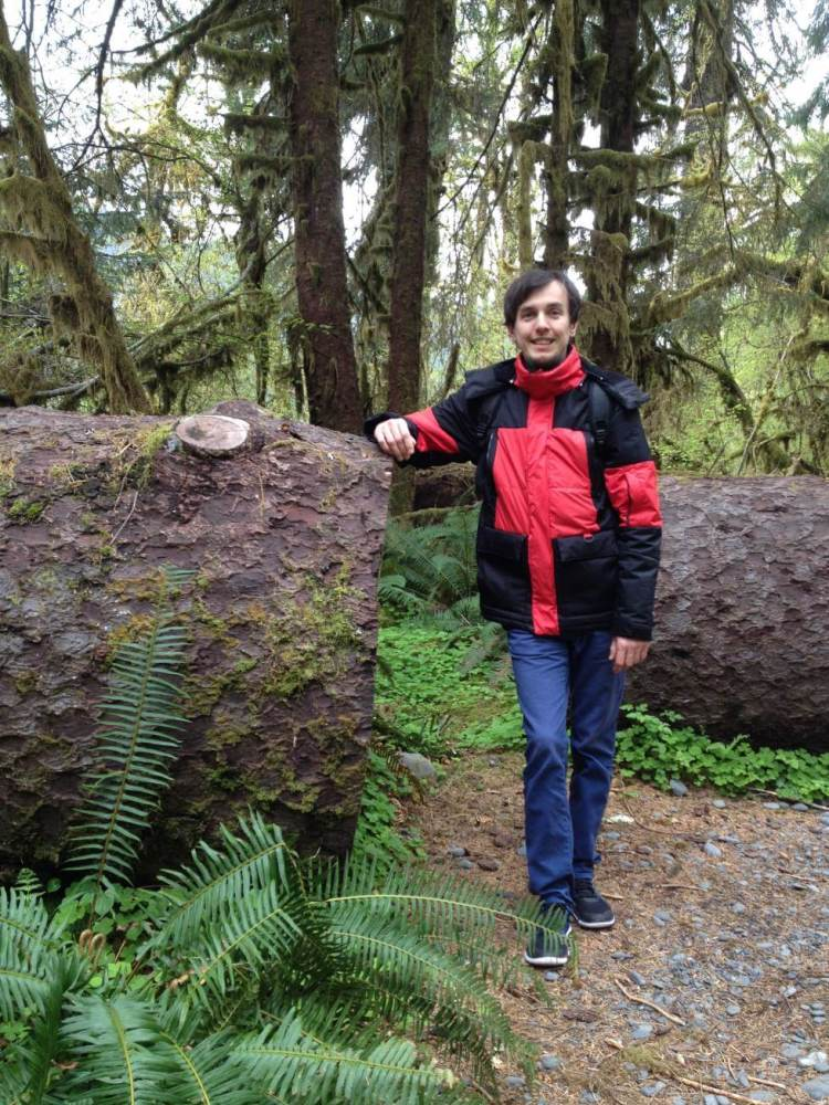 A Huge Tree in Olympic National Park