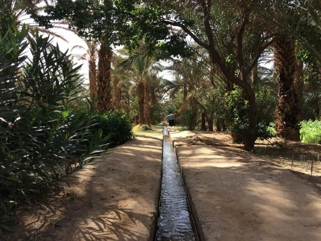 Oasis near Hassi Labied Morocco