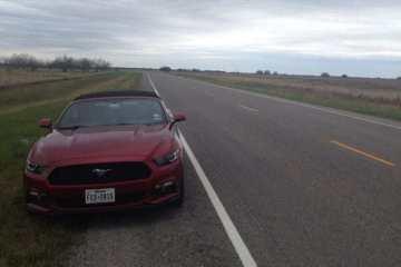 Mustang in Texas