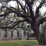 Goliad Hanging Tree