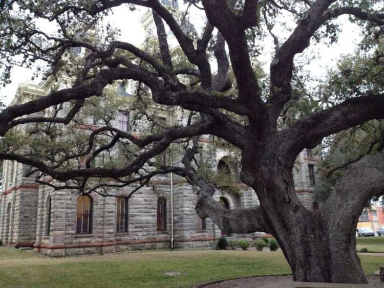 The Goliad Hanging Tree