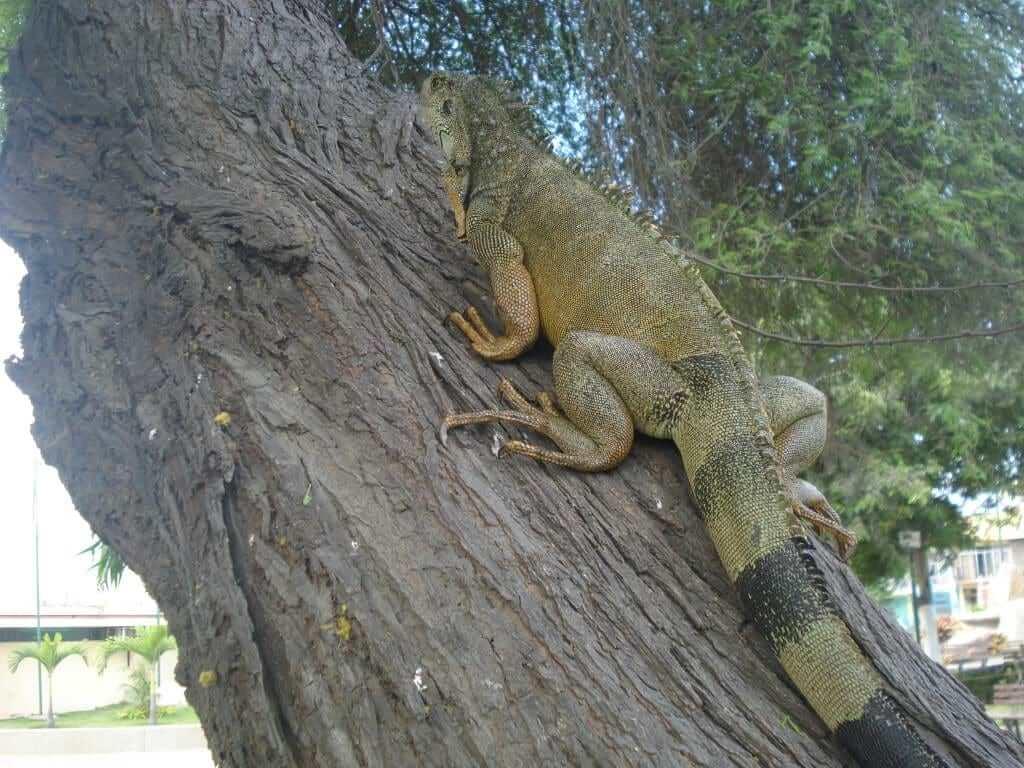parque de los iguanas ecuador