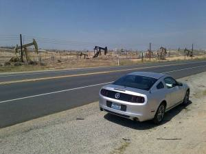 The Mustang from Alamo