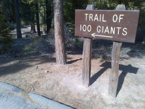 The Trail of 100 Giants
