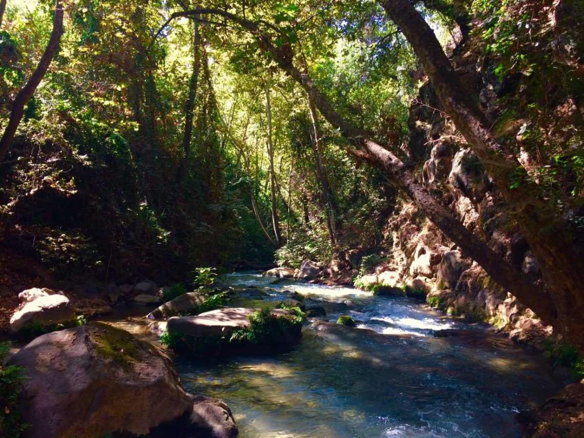 A wooded area in the Banias Nature Reserve