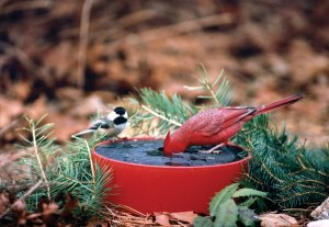 Happy Bird DLXSS Deluxe Wild Bird Solar Sipper