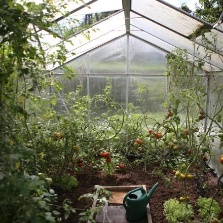 Gemüsepflanzen
