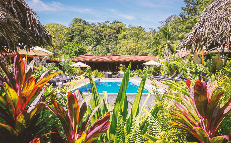 A pool with green and red tropical plants in the foreground and thick rainforest in the background at Island Plantation in Bocas del Toro on Isla Colon.