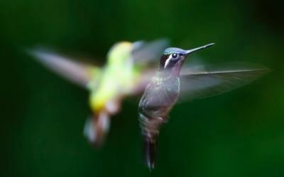 Poem: Hovering