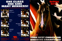 Print Ad Design Empress Arabian Horses Breeding Ad
