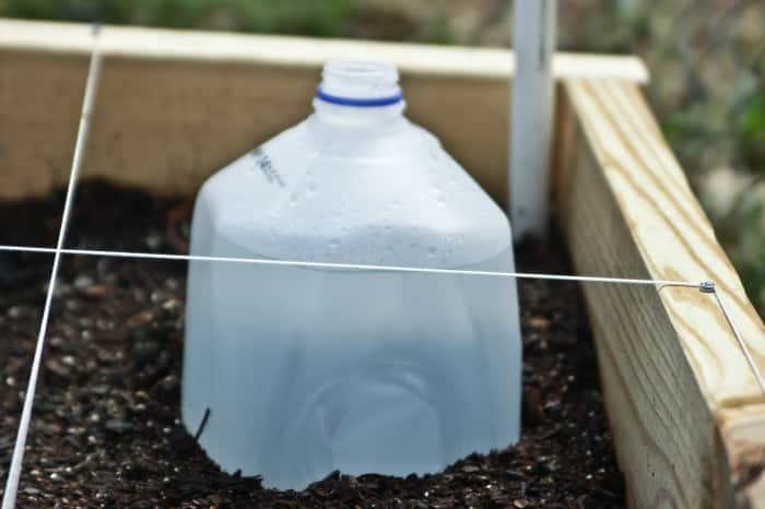 milk jug watering system