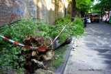 Feuerwehrfrauen zersägen umgefallenen Baum in der Nordbahnstraße (7)