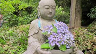 Ajisai temple, Kamakura