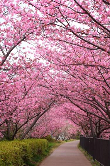 Shizuoka (Soleil Levant 75)