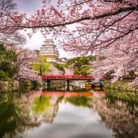 Himeji au printemps.