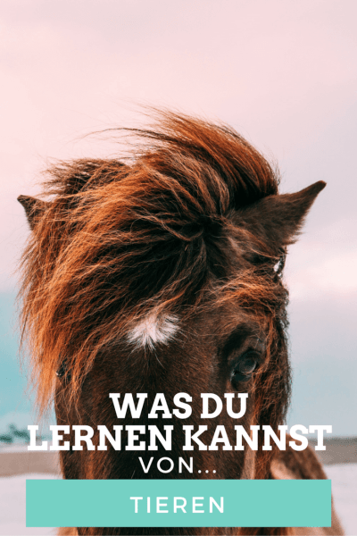 Tiere sind hervorragende Lehrmeister. Welche Lektionen Du von ihnen lernen kannst? Lies weiter! #tiere #leben #lektionen #liebe