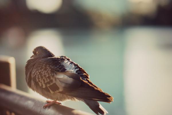 Was Du lernen kannst von Tauben