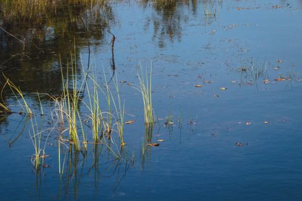 De Teut, natuurlandschap in Zonhoven.