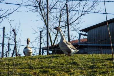 Blogwandeling met Verwonderhoekje in Kerniel, Borgloon.
