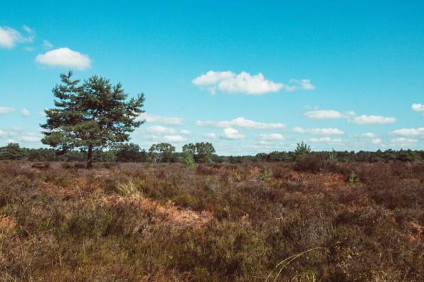 Heuvelse Heide. Wandeling in Lommel, Limburg.