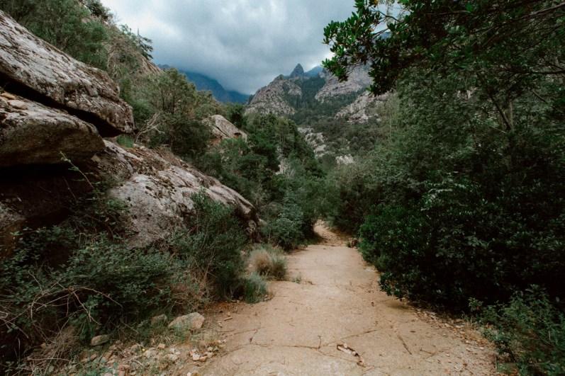 Forêt de Bonifatu. Corsica.