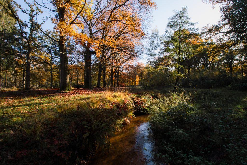 Herfst in het Munsterbos in Bilzen, Limburg, België.