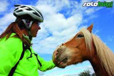 Un simpático caballo de Can Jou
