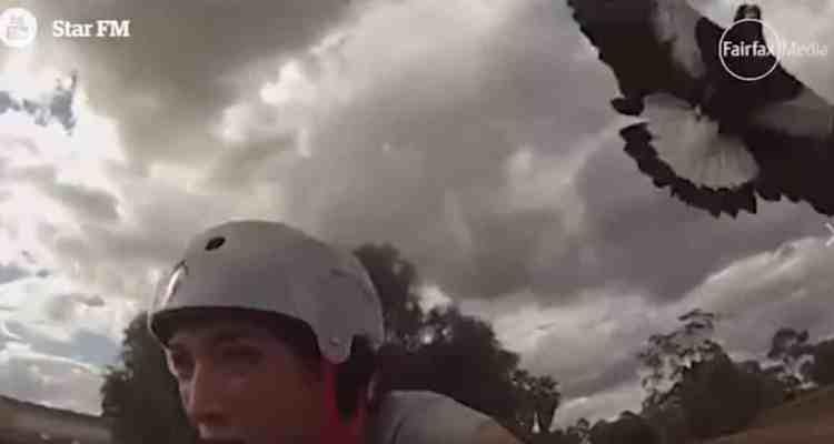 El ataque de una rapaz a una ciclista