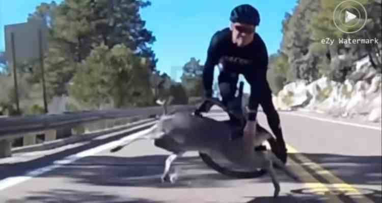 accidente ciclista ciervo