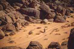 Mejores fotos etapa 2 titan arabia (42)