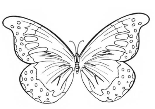 Desenho de Borboleta para Colorir: 40 Modelos Lindos para