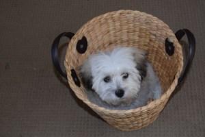 puppy-952918_960_720