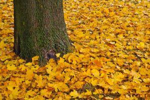 autumn-1778726__480