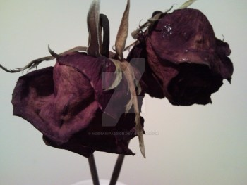 two_dead_roses__by_nobrainpassion-d2qn5pk.jpg