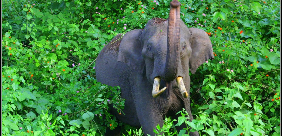 Elephant - wild encounter at Kabini