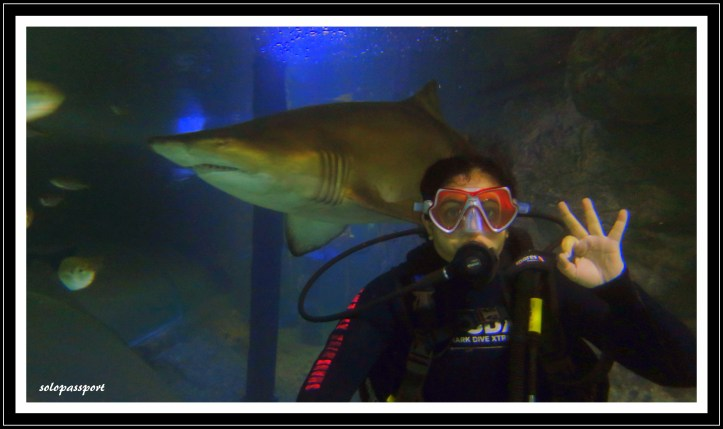 Shark Dive Xtreme in Sydney